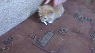 Kitten and cigarette  - Video