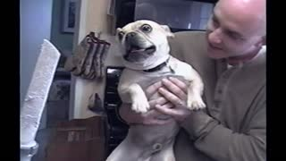 Bulldog Hates Vacuum Attachment - Video