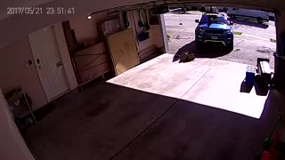 Bear Charges Man in Garage - Video