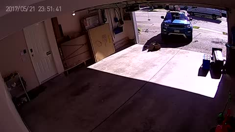 Bear Charges Man in Garage