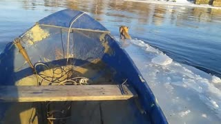 Fisherman Helps Ferry a Fox to Shore