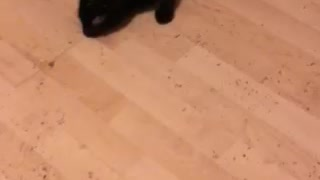 Kitty loves catnip!