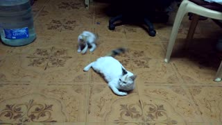 Cute little kitten plays with mother's tail