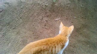 Cat and Scorpion Fight  - Video
