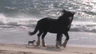 (VIDEO) Must Watch: Incredible Horse Know the Way Home Playing at the Beach! - Video