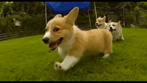 Cute dogs 30 seconds slow motion