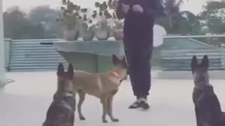 VIDEO : Mahendra Singh Dhoni Playing With DOGS - MS Dhoni - Cricket - Video