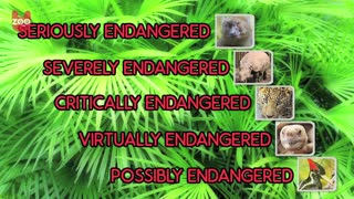 Top 5 Endangered Animals - Video