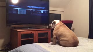 Dog watching horror movie barks when senses danger - Video