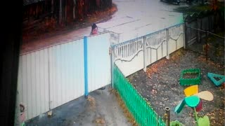 Drunk Neighbor Falls into Yard - Video