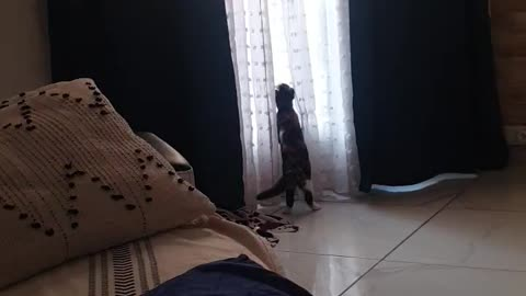 the cat wants to go out