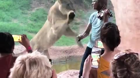 Lion Lunges for Violinist