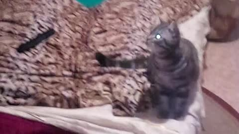 cat stabbed a balloon!