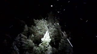 Hunting for a Christmas Tree in Night Snow (Oregon)