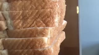 Dog balances slices of bread on top of head - Video