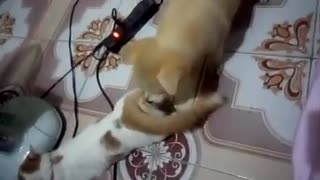 My cat and dog together are so cute - Funny cat & dog video