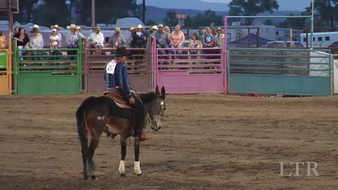 Awesome Video Where Mules Compete In Reining