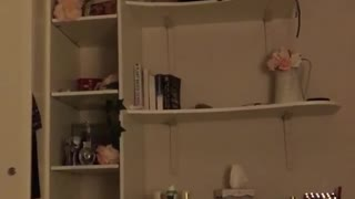 Cat tries to climb down shelves - Video