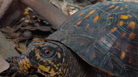 5 Types of Turtles You Can Have as Pets