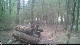 Opening Morning Buck Under Stand