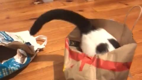 Goofy cat jumps into empty paper bag