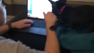 Black dog biting owners hand while on laptop - Video