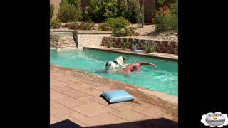 Dog's and Water epic fails