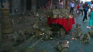 Thais honor monkeys with elaborate banquet - Video