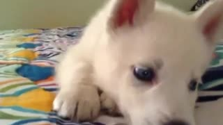 The Cutest Puppies Compilation