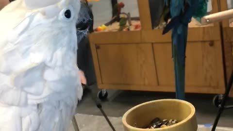 Energetic Parrot Puts on a Show