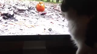 Cat trying to get bird from computer screen - Video