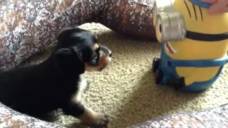 Puppy vs. Minion - Video