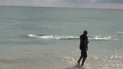 Dolphin Attack Sebastian Inlet Florida Terrified Swimmer