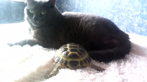 Cat and turtle share very special relationship