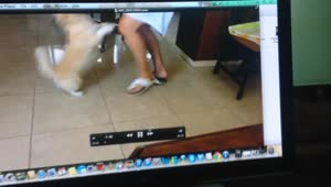 Puppy reacts to owner's voice on video - Video