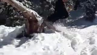 Guy snowboards over large tree stump and crashes  - Video