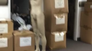 Kid tries to kick headless mannequin slips fails