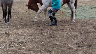 Clever Horse Can Bow for Treats