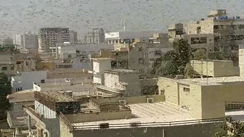 Massive swarm of locusts take over apartment's rooftop patio