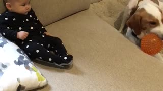 Dog entertains baby during rainy day - Video