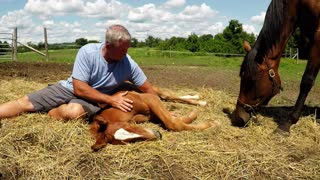 Nothing is as Cute as a Newborn Horse who Wants to Cuddle - Video