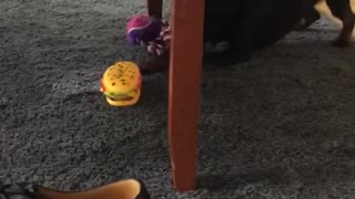 Dog tries to play with his toy