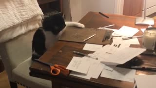 Black cat dropping pens from brown table. - Video