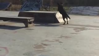 Dog playing frisbee - Video