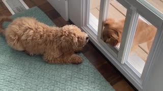 Dog waits for pup to walk through doggy door for immediate playtime
