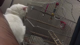 Cat wants to play with best friend - Video