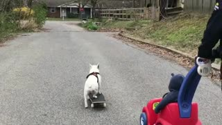 French Bulldog skateboards through park - Video