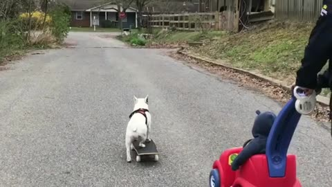 French Bulldog skateboards through park