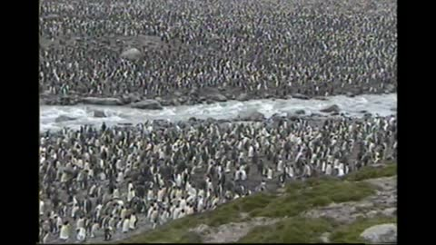 So Many Penguins