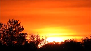 Sun setting into the trees. - Video